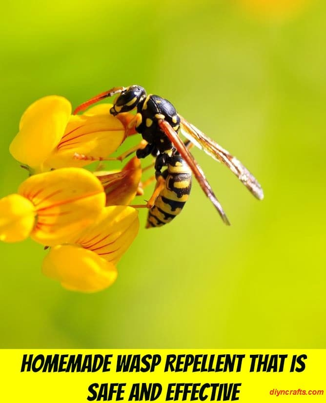 Homemade Wasp Repellent That is Safe and Effective