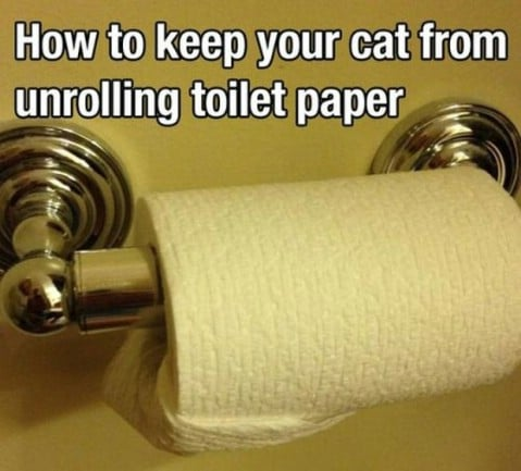 Cats and toilet paper solution - Top 68 Lifehacks and Clever Ideas that Will Make Your Life Easier