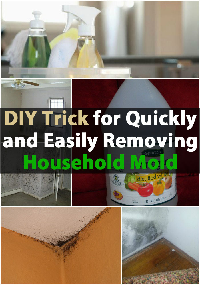 DIY Trick for Quickly and Easily Removing Household Mold