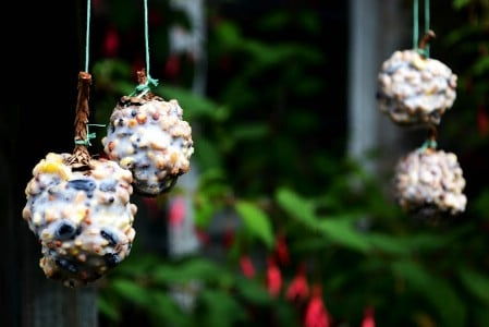 Pinecone Feeders - 23 DIY Birdfeeders That Will Fill Your Garden With Birds