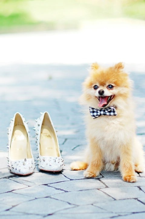 Doggie Bow Ties - 30 Extremely Creative No-Sew DIY Projects