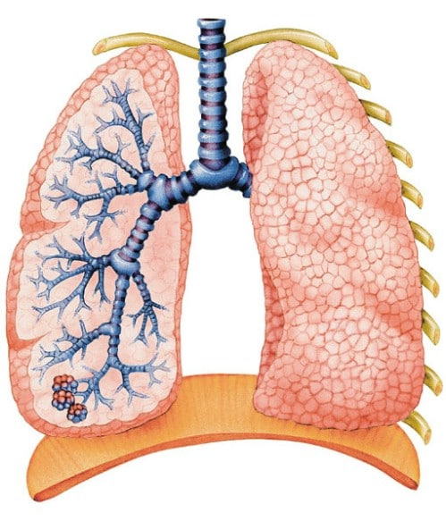 1. Respiratory Issues