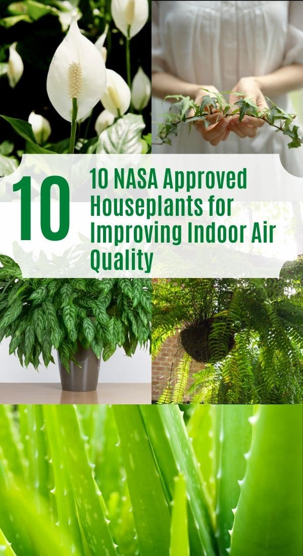 NASA Approved Air Purifier Plants
