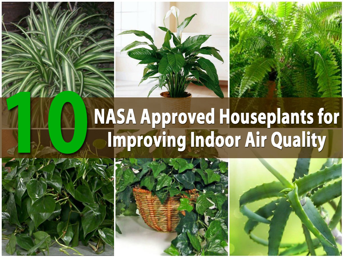 Top 10 NASA Approved Houseplants for Improving Indoor Air ... Nasa Best Plants For Home on best mulch for home, best trees for home, best solar system for home, best chairs for home, best pets for home, best fish for home, best dogs for home, best light for home, best flowers for home, best lighting for home, best lucky plant,