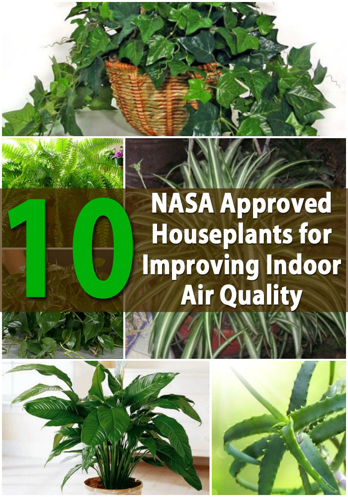 Top 10 Nasa Roved Houseplants For Improving Indoor Air Quality
