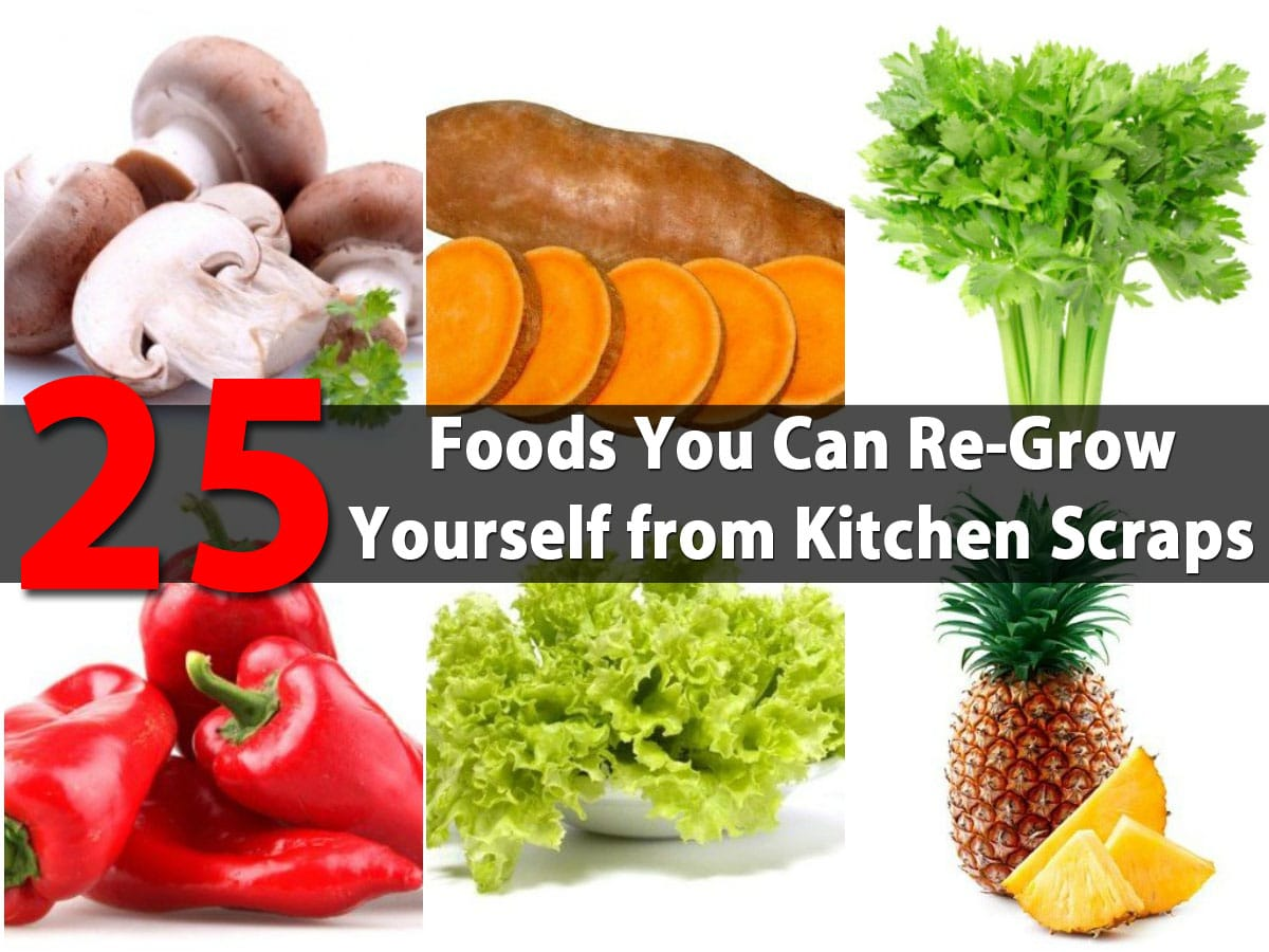 25 Foods You Can Re-Grow Yourself from Kitchen Scraps ... Growing Vegetables From Scraps