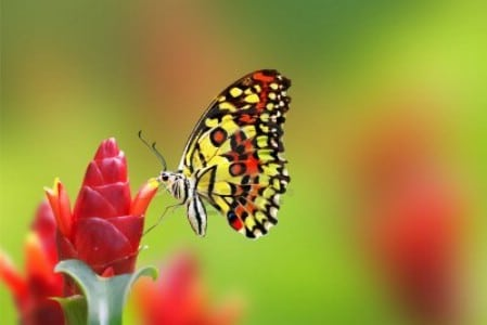 Plant A Butterfly Garden - 150 Remarkable Projects and Ideas to Improve Your Home's Curb Appeal
