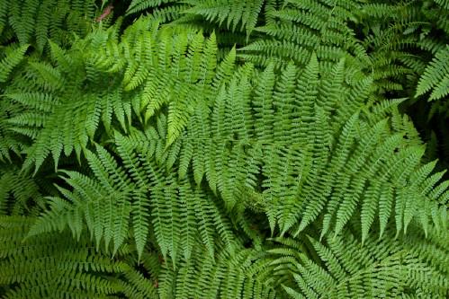 7. Perk Up Ferns