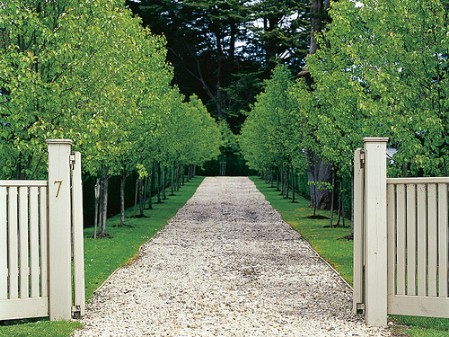 Line The Driveway With Trees - 150 Remarkable Projects and Ideas to Improve Your Home's Curb Appeal