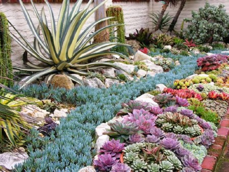 Plant A Succulent Bed - 150 Remarkable Projects and Ideas to Improve Your Home's Curb Appeal