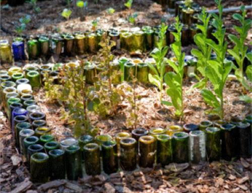 Wine Bottle Border