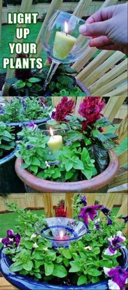 Use Broken Stemware To Give Plants Elegance