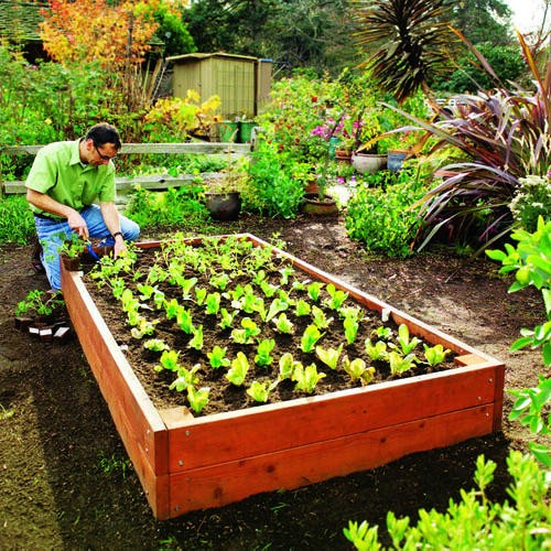 Build Raised Garden Beds