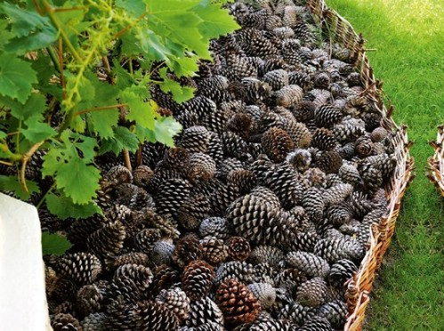 Fill Flower Beds with Pinecones