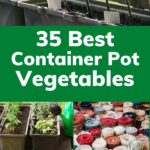 35 Container Garden Ideas