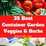 35 Container Garden Ideas