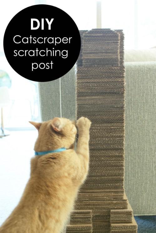 Cardboard Catscraper