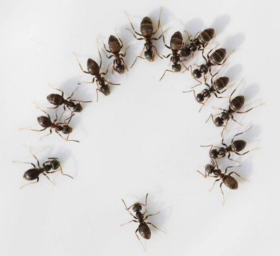Get rid of ants.