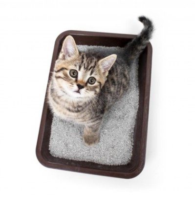 Coat a kitty litter tray.