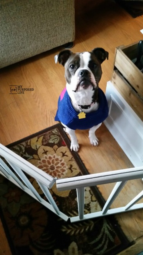 Pet Gate - 20 Delightfully Creative and Functional Ways to Repurpose Old Cribs