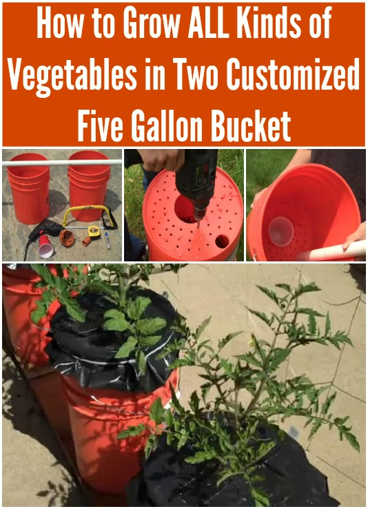 How to Grow ALL Kinds of Vegetables in Two Customized Five Gallon Buckets
