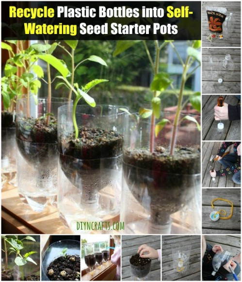 Turn plastic bottles into self-watering seed starters.