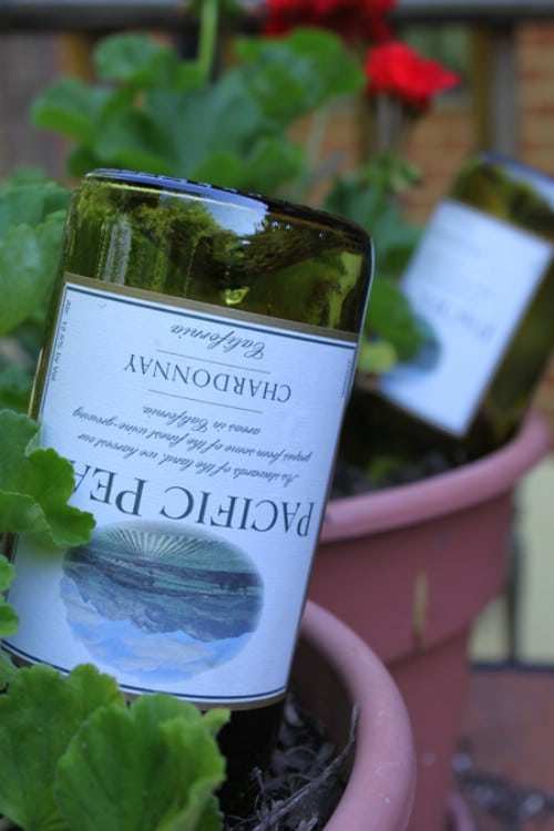 Easy watering hack with wine bottles.
