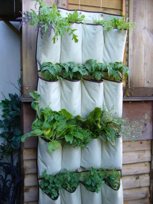 Turn a hanging pocket organizer into a vertical garden.