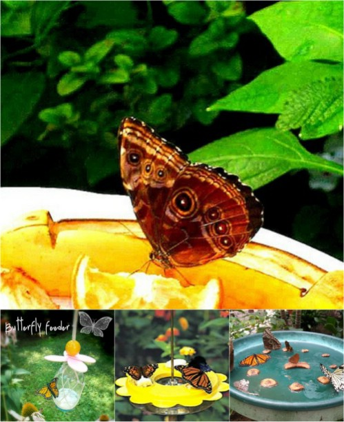 Make a butterfly feeder in 6 easy steps.