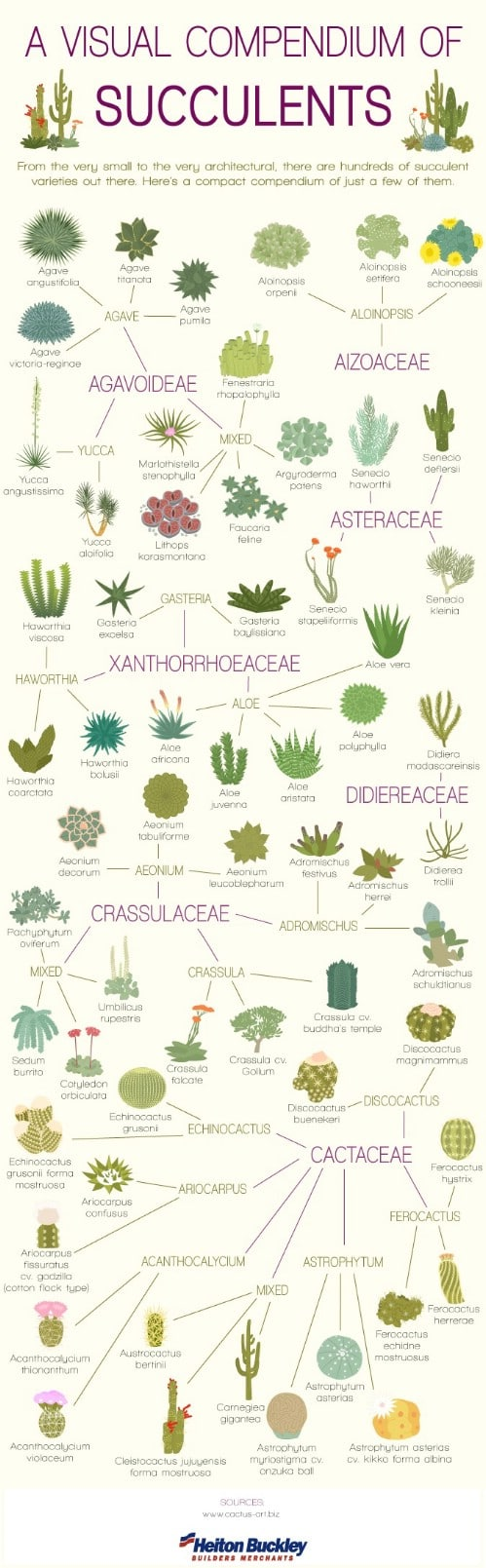 Learn your succulents.