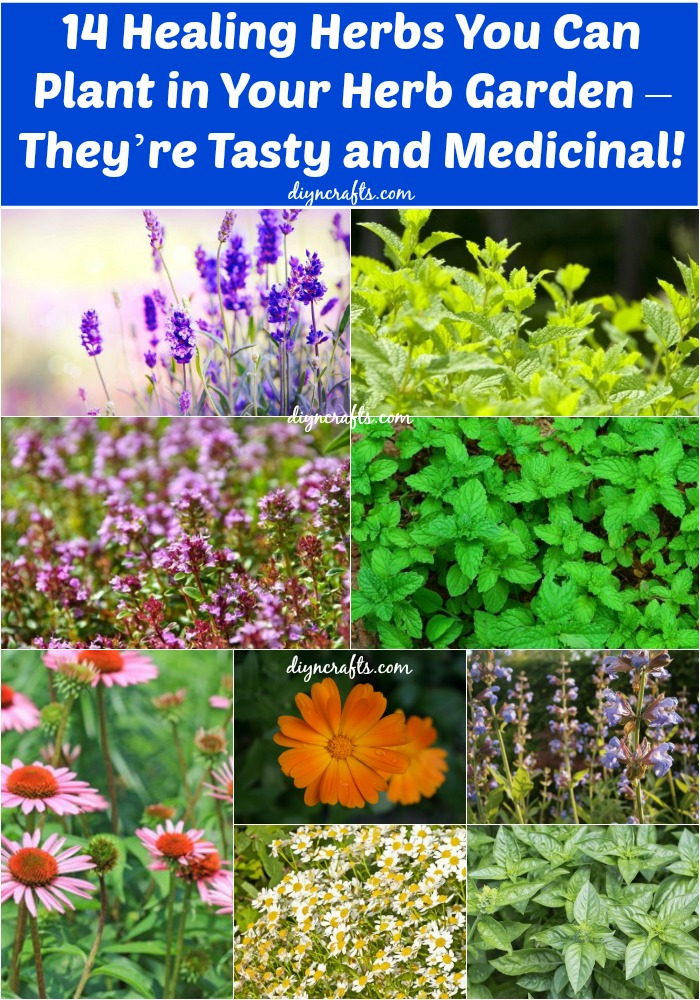 14 Healing Herbs to Plant in Your Herb Garden – They're Tasty and Medicinal!...