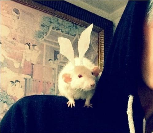 Rat Bunny