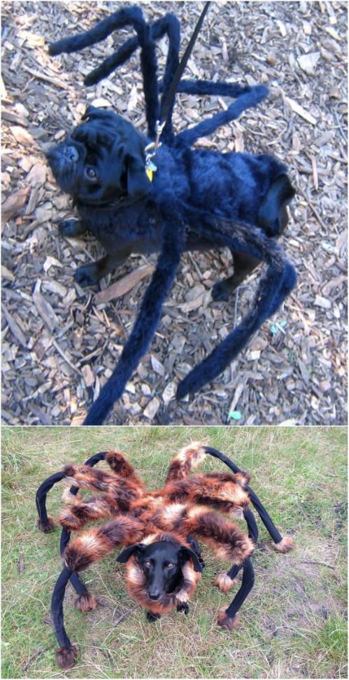 13-spiderdog