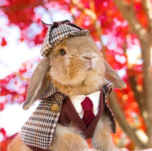 Sherlock Holmes the Rabbit
