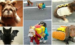 These 24 Halloween Pet Costumes may Just be Better than Your Own!