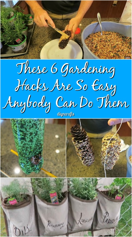 These 6 Gardening Hacks Are So Easy Anybody Can Do Them {Video}