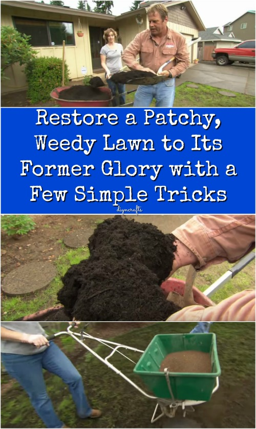 Restore a Patchy, Weedy Lawn to Its Former Glory with a Few Simple Tricks {Video}