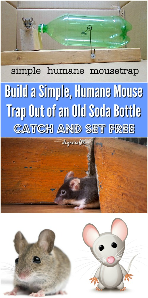 Build a Simple, Humane Mouse Trap Out of an Old Soda Bottle {Easy Project}