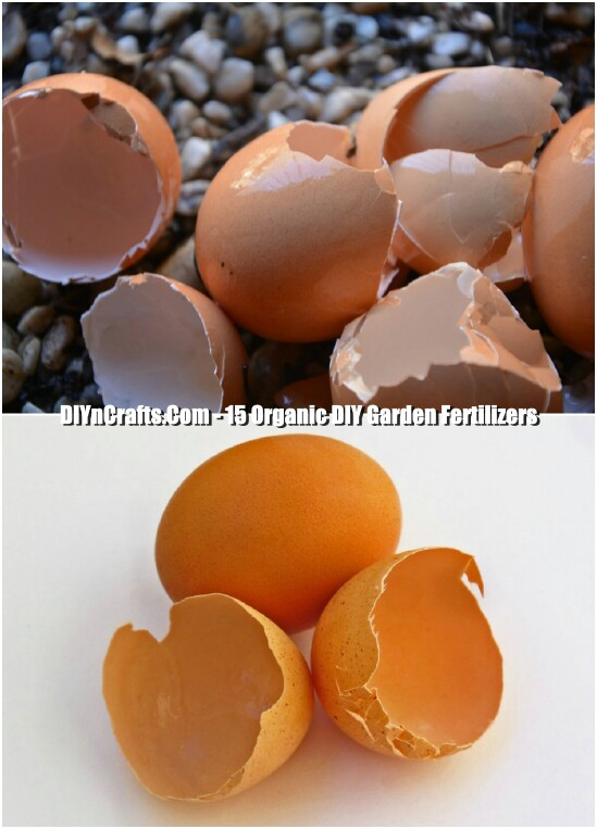 Egg Shell Fertilizer