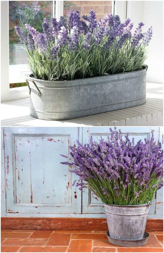 Lavender Tub