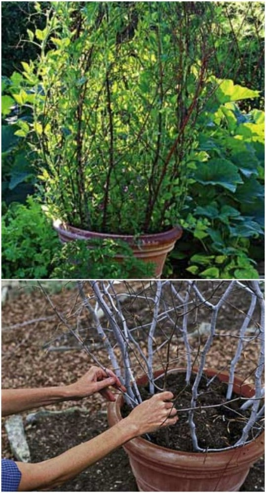 DIY Branch Trellis In A Pot