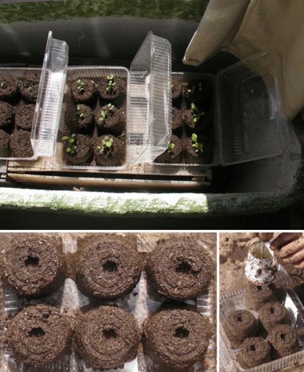 Plastic Salad Container Planters