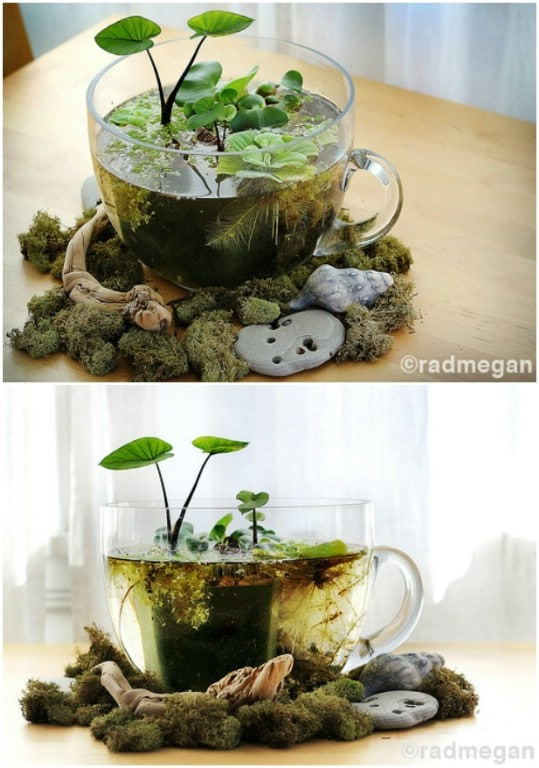 DIY Indoor Mini Water Garden
