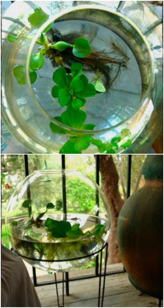 Gorgeous DIY Water Terrarium