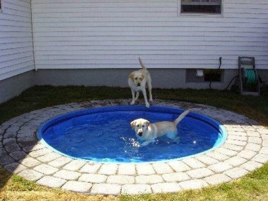 Doggone Perfect Swimming Pool