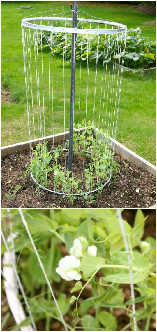Easy DIY Bike Rim Trellis