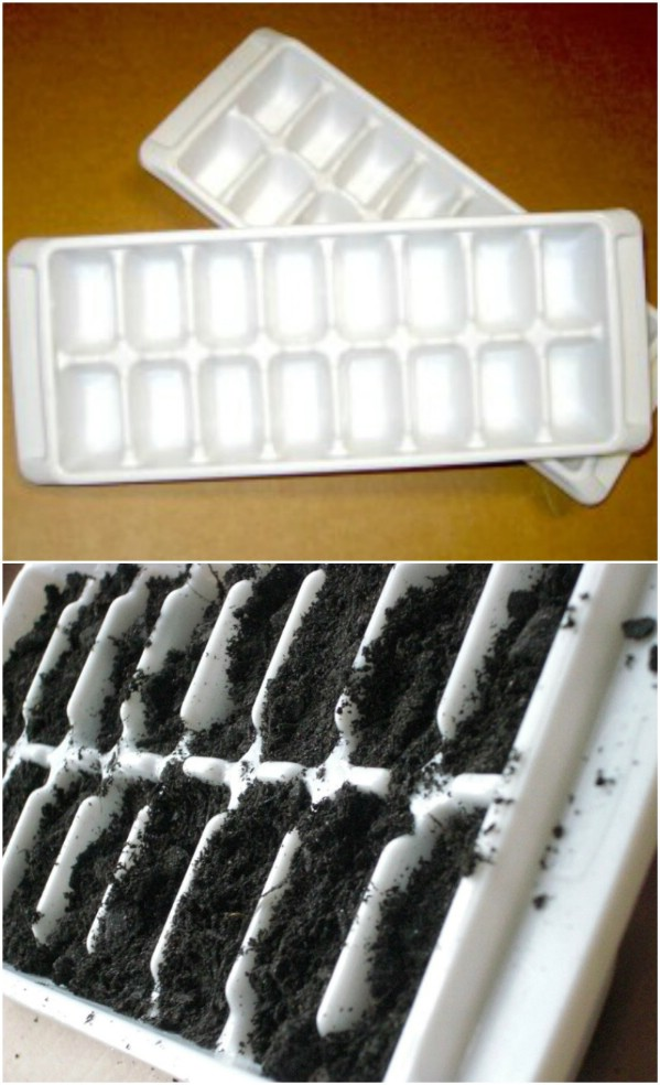 Repurposed Ice Cube Tray Turned Seed Starter