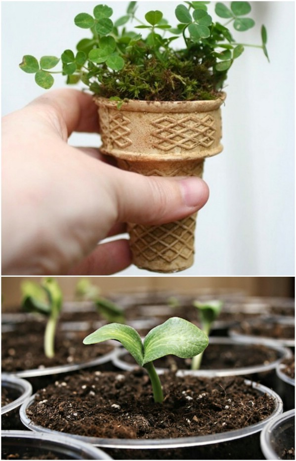 Ice Cream Cone Seed Starters