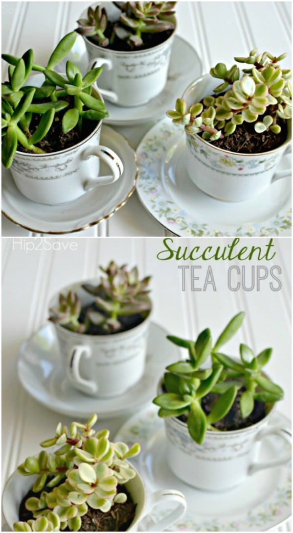 Easy DIY Succulent Teacups