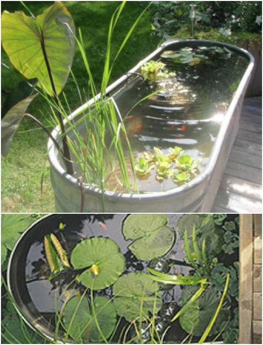 Galvanized Bathtub Mini Pond